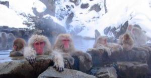 Orange Coast Magazine has some travel tips for Monkey Day.